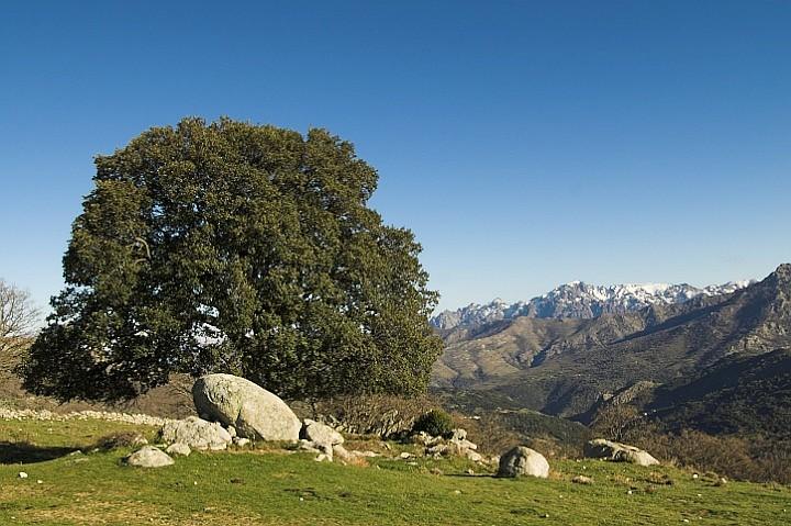 Montane pasture